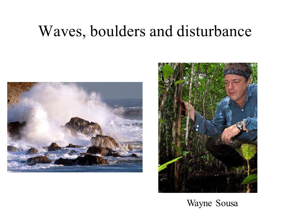 Waves, boulders and disturbance Wayne Sousa