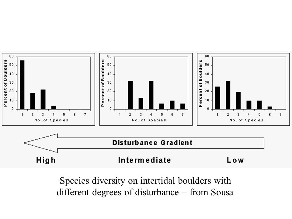 Species diversity on intertidal boulders with different degrees of disturbance – from Sousa Boulder sizeSmallMediumLarge turnover chance 49% / month9 % /month0.1%/ month bare spacemostmediumlittle diversitylow - mostly Ulva high - several species low - mostly Gigartina
