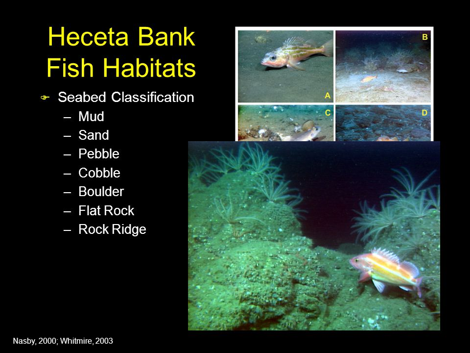 Heceta Bank Fish Habitats  Seabed Classification –Mud –Sand –Pebble –Cobble –Boulder –Flat Rock –Rock Ridge Nasby, 2000; Whitmire, 2003
