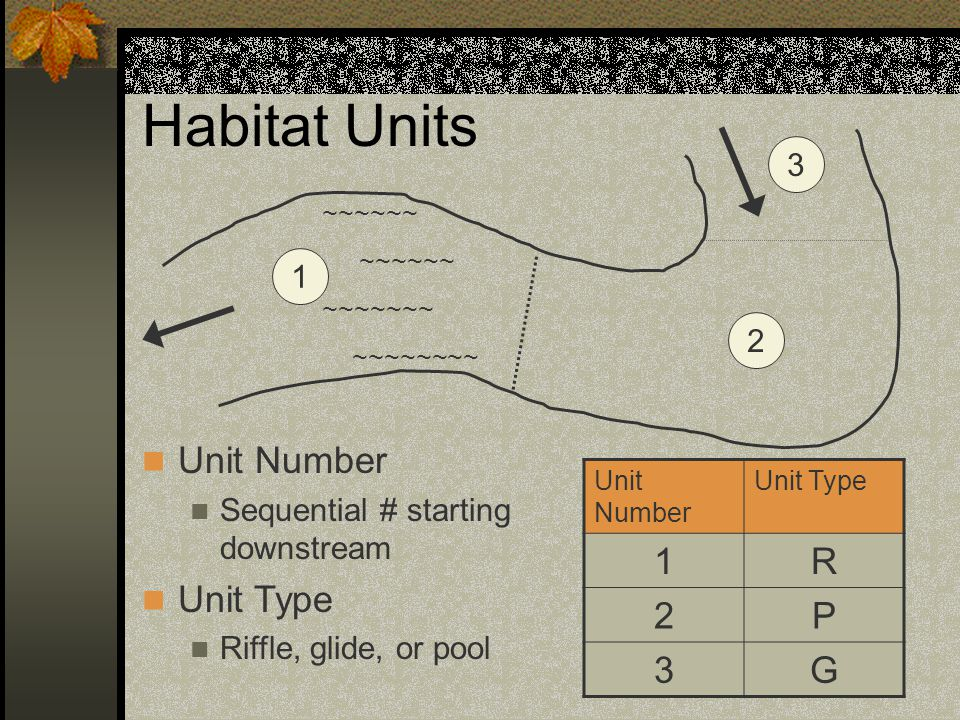 Unit Types – Riffle RIRiffle: Fast, turbulent, shallow flow over gravel or cobble substrate.