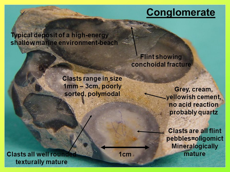 Conglomerate Clasts are all flint pebbles=oligomict Mineralogically mature Clasts all well rounded texturally mature Grey, cream, yellowish cement, no