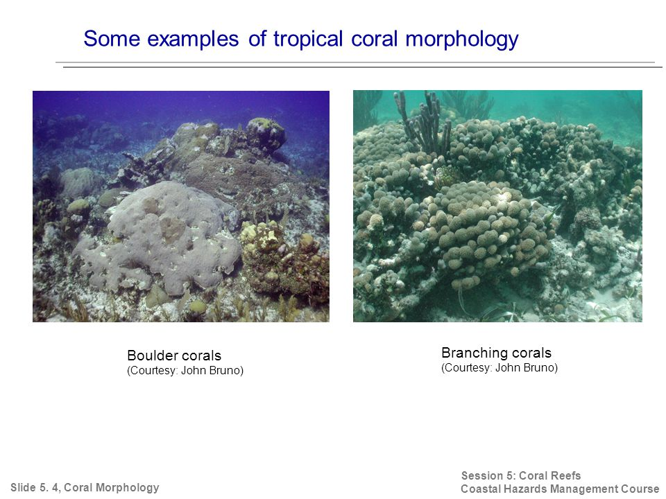 Some examples of tropical coral morphology Session 5: Coral Reefs Coastal Hazards Management Course Slide 5.