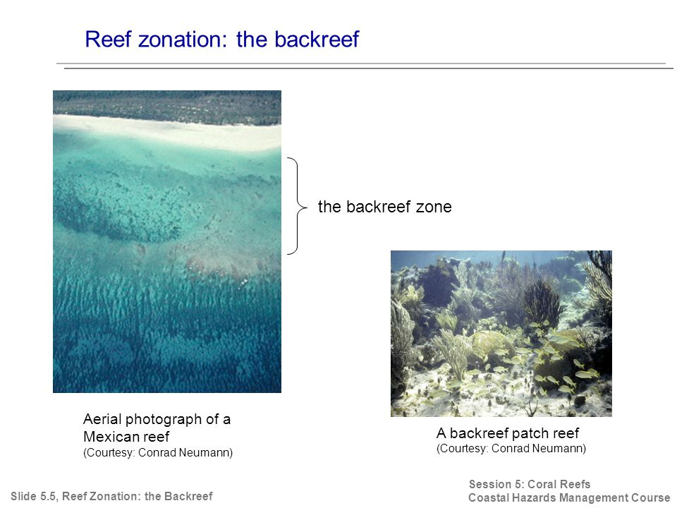 Reef zonation: the backreef Session 5: Coral Reefs Coastal Hazards Management Course Slide 5.5, Reef Zonation: the Backreef Aerial photograph of a Mexican reef (Courtesy: Conrad Neumann) the backreef zone A backreef patch reef (Courtesy: Conrad Neumann)