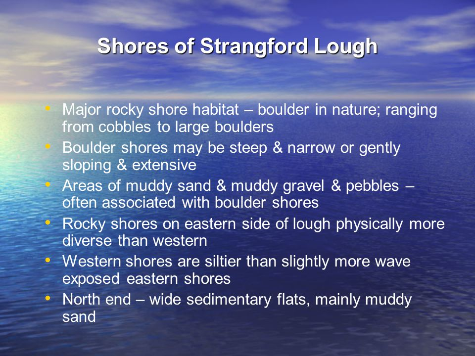 Shores of Strangford Lough Major rocky shore habitat – boulder in nature; ranging from cobbles to large boulders Boulder shores may be steep & narrow