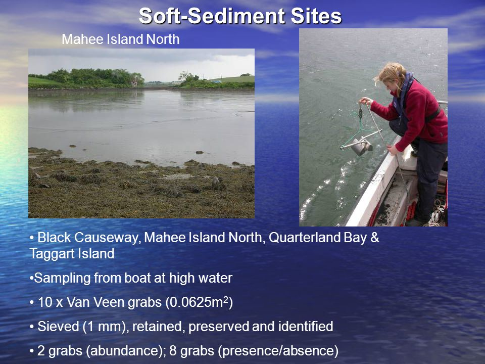 Soft-Sediment Sites Mahee Island North Black Causeway, Mahee Island North, Quarterland Bay & Taggart Island Sampling from boat at high water 10 x Van Veen grabs (0.0625m 2 ) Sieved (1 mm), retained, preserved and identified 2 grabs (abundance); 8 grabs (presence/absence)
