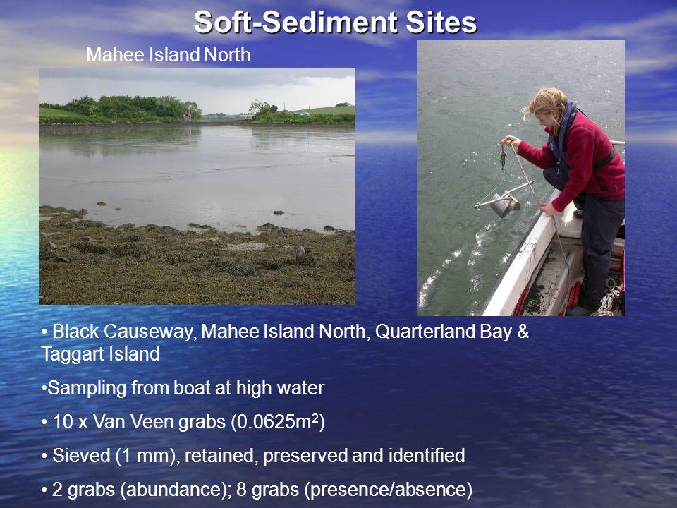 Soft-Sediment Sites Mahee Island North Black Causeway, Mahee Island North, Quarterland Bay & Taggart Island Sampling from boat at high water 10 x Van