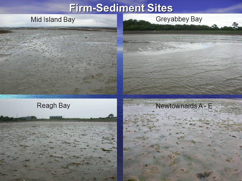 Firm-Sediment Sites Mid Island Bay Greyabbey Bay Reagh Bay Newtownards A - E