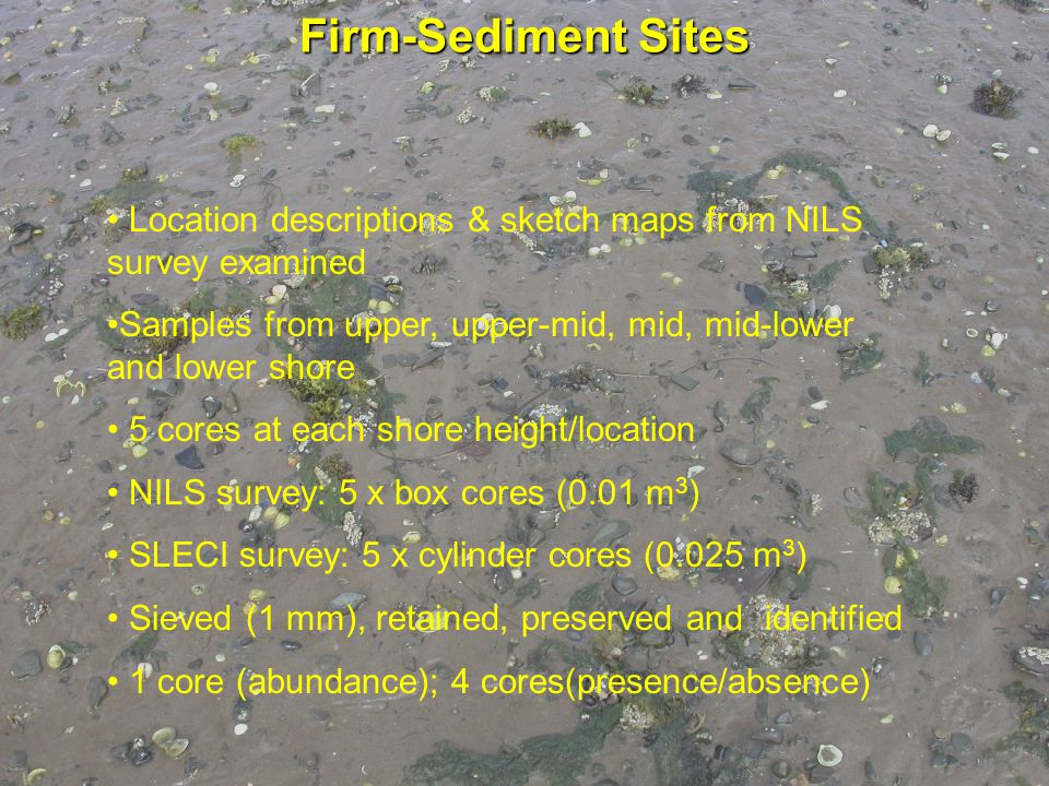 Location descriptions & sketch maps from NILS survey examined Samples from upper, upper-mid, mid, mid-lower and lower shore 5 cores at each shore height/location NILS survey: 5 x box cores (0.01 m 3 ) SLECI survey: 5 x cylinder cores (0.025 m 3 ) Sieved (1 mm), retained, preserved and identified 1 core (abundance); 4 cores(presence/absence) Firm-Sediment Sites