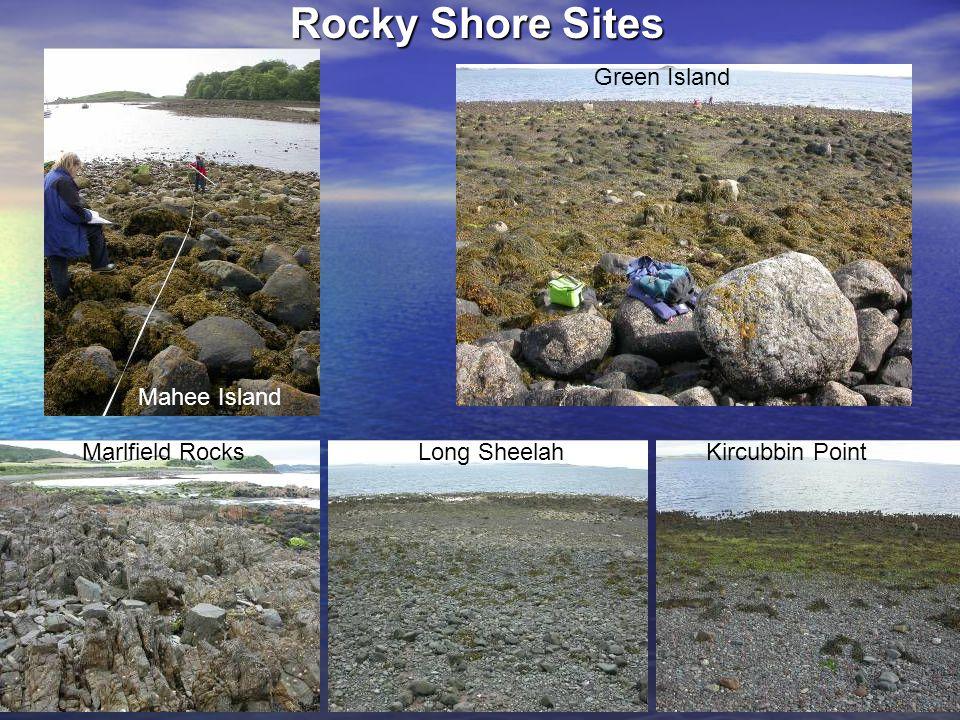 Rocky Shore Sites Green Island Kircubbin PointLong Sheelah Mahee Island Marlfield Rocks