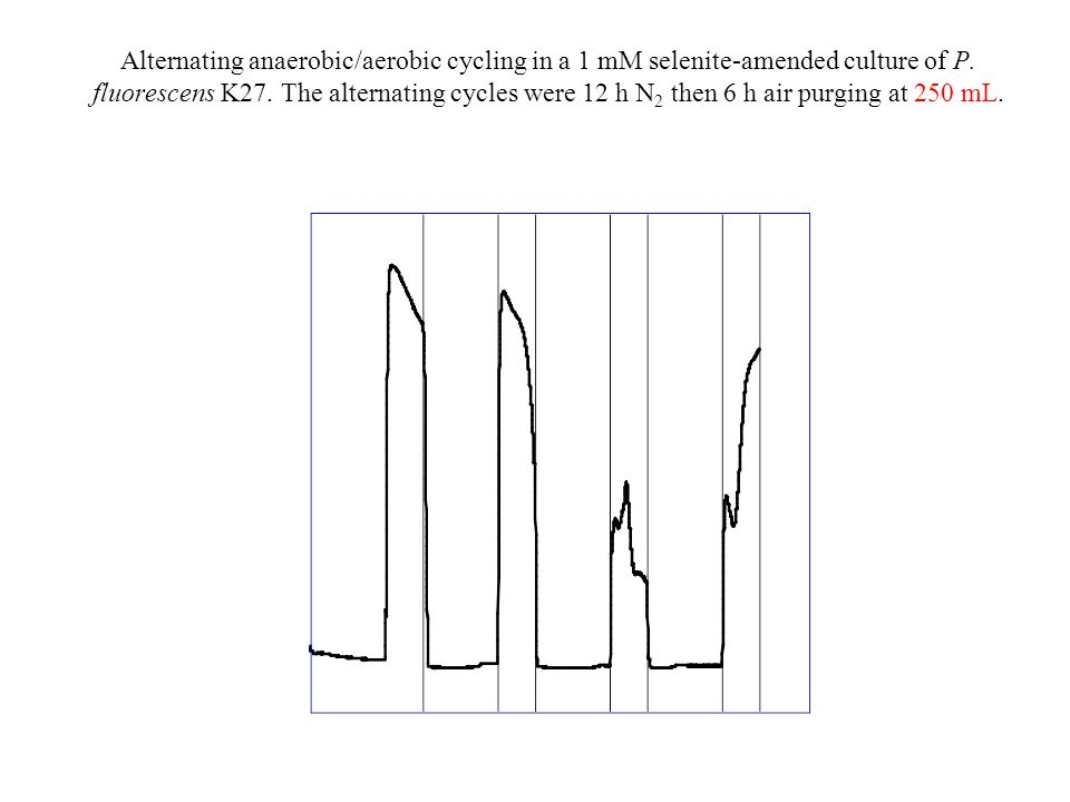 Alternating anaerobic/aerobic cycling in a 1 mM selenite-amended culture of P.