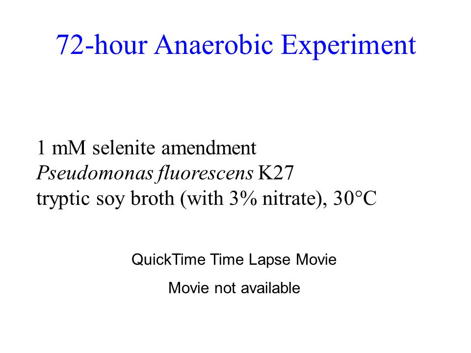 72-hour Anaerobic Experiment 1 mM selenite amendment Pseudomonas fluorescens K27 tryptic soy broth (with 3% nitrate), 30°C QuickTime Time Lapse Movie Movie not available