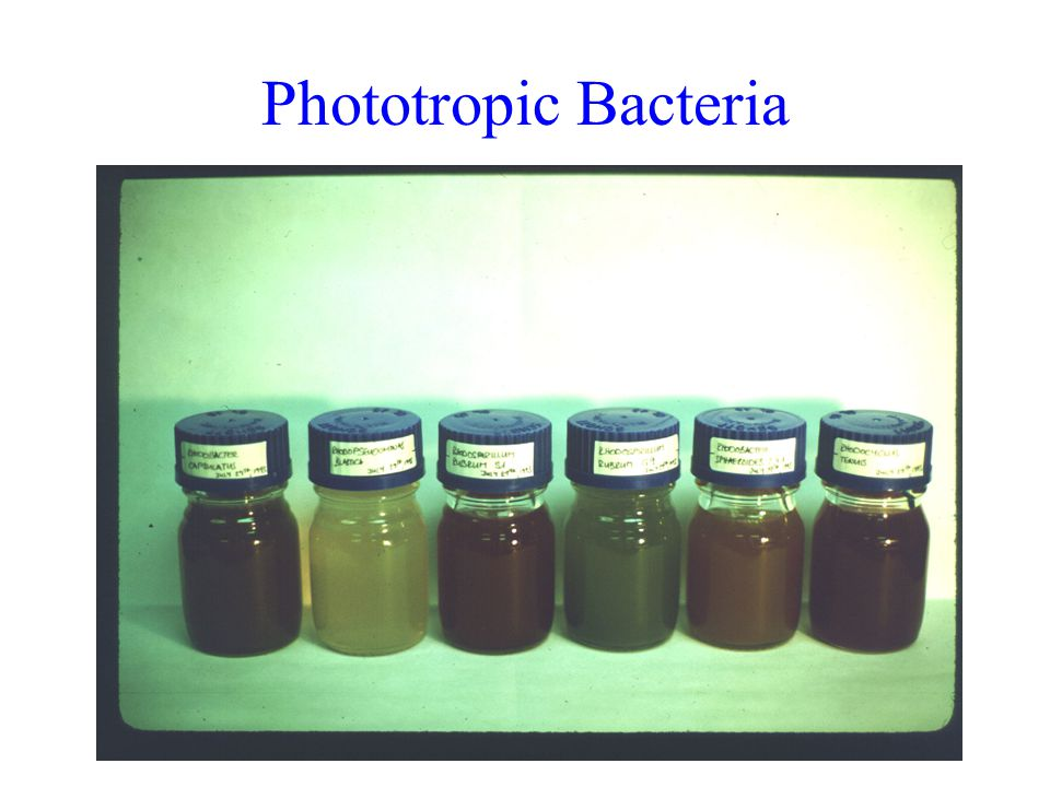 Phototropic Bacteria