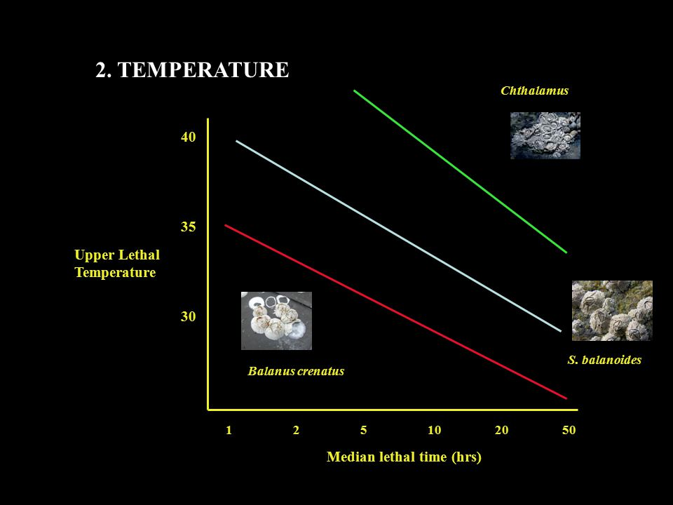2. TEMPERATURE Upper Lethal Temperature Median lethal time (hrs) 40 35 30 Balanus crenatus S.