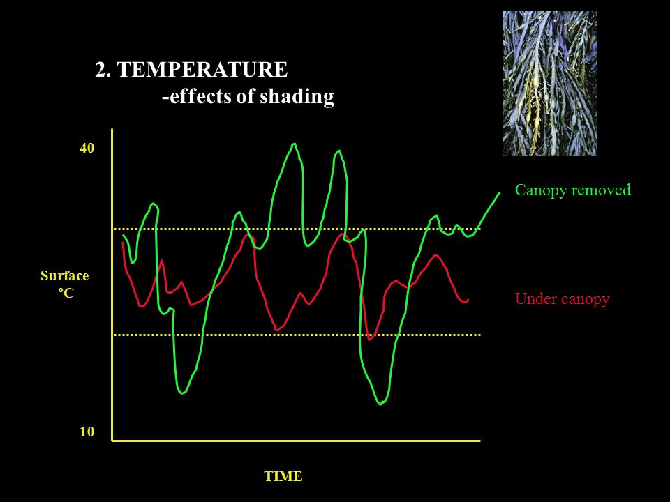 2. TEMPERATURE -effects of shading Surface ºC TIME 40 10 Canopy removed Under canopy