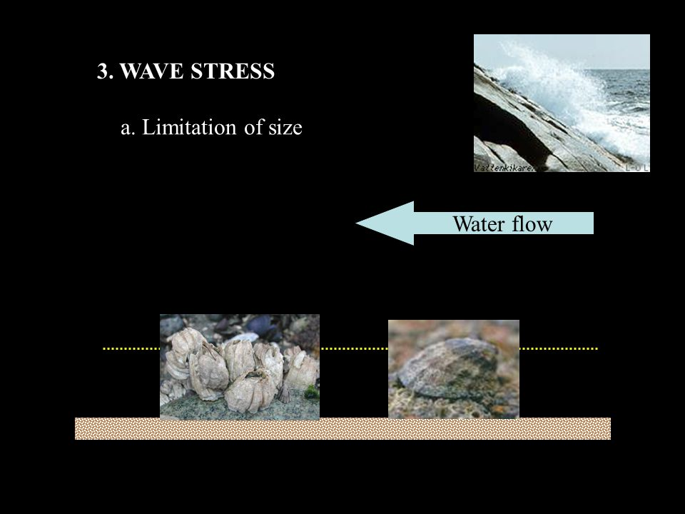 3. WAVE STRESS a. Limitation of size Water flow