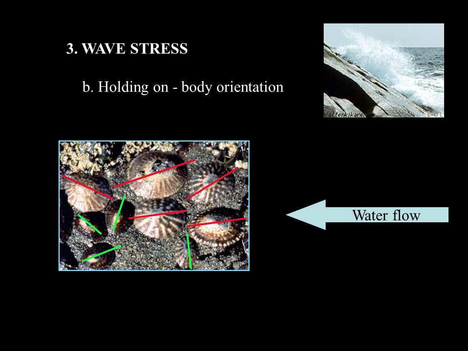 3. WAVE STRESS b. Holding on - body orientation Water flow