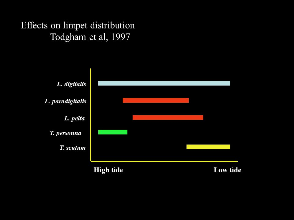 Effects on limpet distribution Todgham et al, 1997 Low tideHigh tide L.