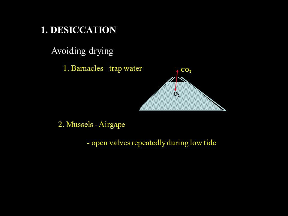 1. DESICCATION Avoiding drying 1. Barnacles - trap water CO 2 O2O2 2.