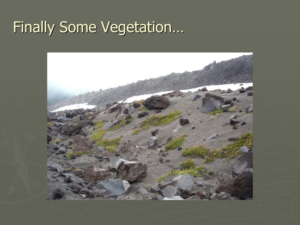 Finally Some Vegetation…