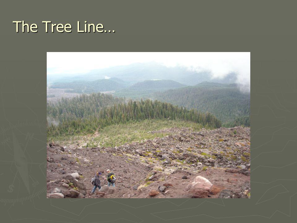 The Tree Line…