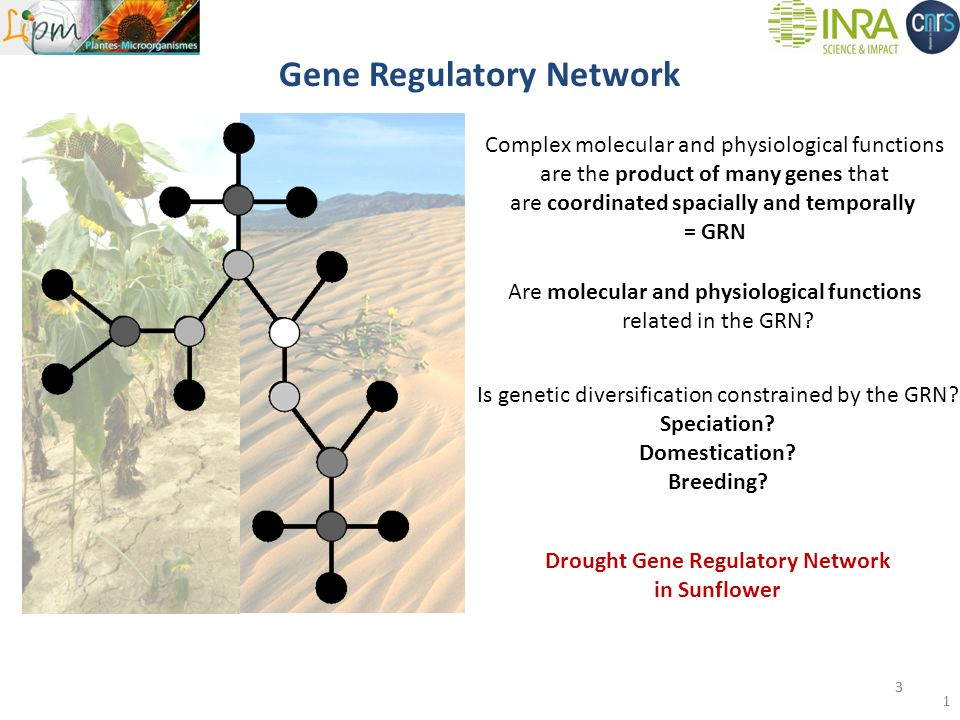 Gene Regulatory Network 33 Complex molecular and physiological functions are the product of many genes that are coordinated spacially and temporally = GRN Are molecular and physiological functions related in the GRN.