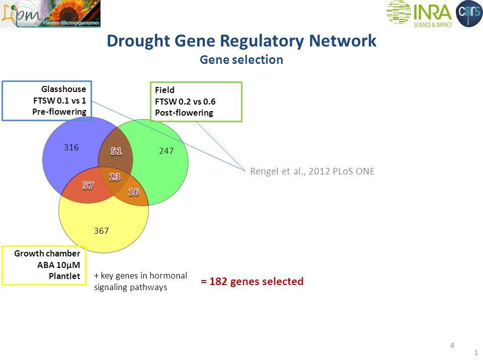 Drought Gene Regulatory Network Gene selection 316 247 Growth chamber ABA 10µM Plantlet 367 + key genes in hormonal signaling pathways = 182 genes selected Field FTSW 0.2 vs 0.6 Post-flowering 4 Glasshouse FTSW 0.1 vs 1 Pre-flowering 4 Rengel et al., 2012 PLoS ONE
