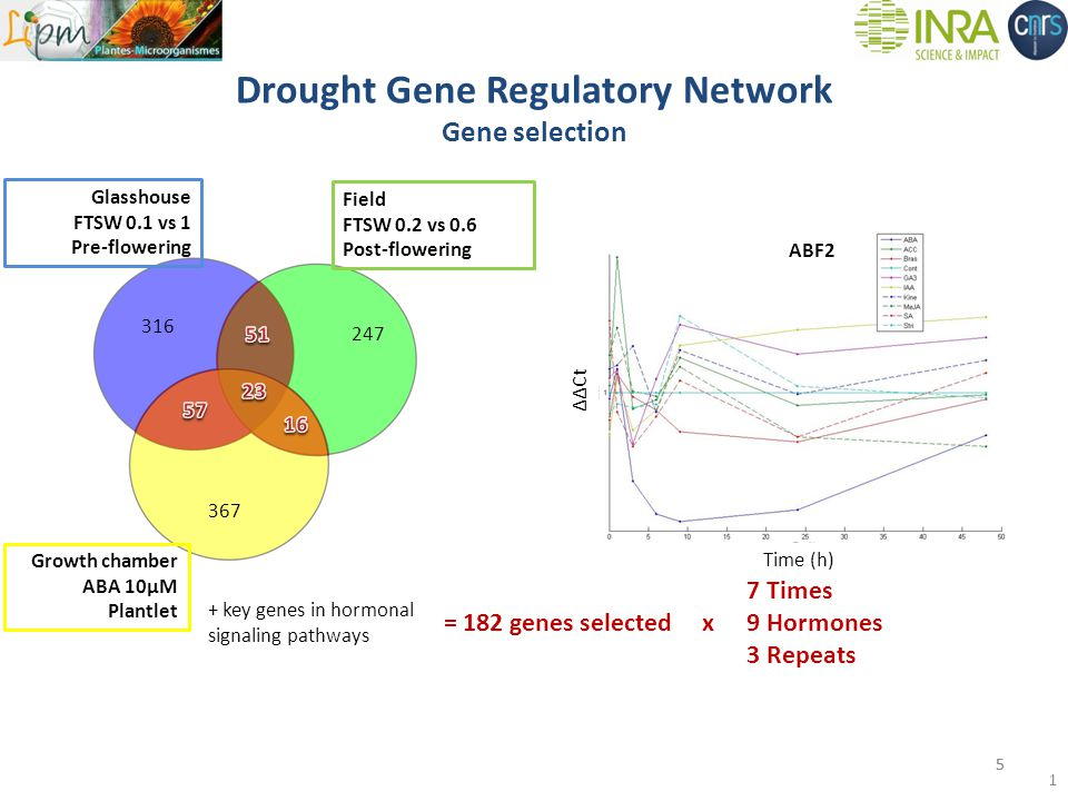 Time (h) ΔΔCt Drought Gene Regulatory Network Gene selection 316 247 Growth chamber ABA 10µM Plantlet 367 + key genes in hormonal signaling pathways = 182 genes selected x Field FTSW 0.2 vs 0.6 Post-flowering 7 Times 9 Hormones 3 Repeats 5 ABF2 Glasshouse FTSW 0.1 vs 1 Pre-flowering 5