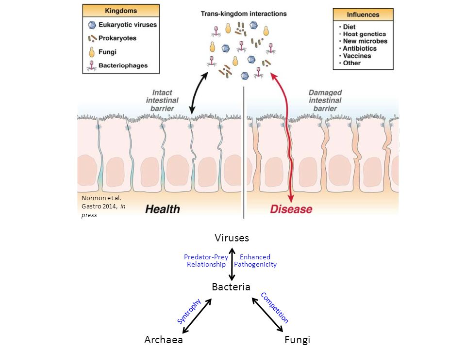 Normon et al. Gastro 2014, in press Bacteria Viruses FungiArchaea Competition Syntrophy Enhanced Pathogenicity Predator-Prey Relationship