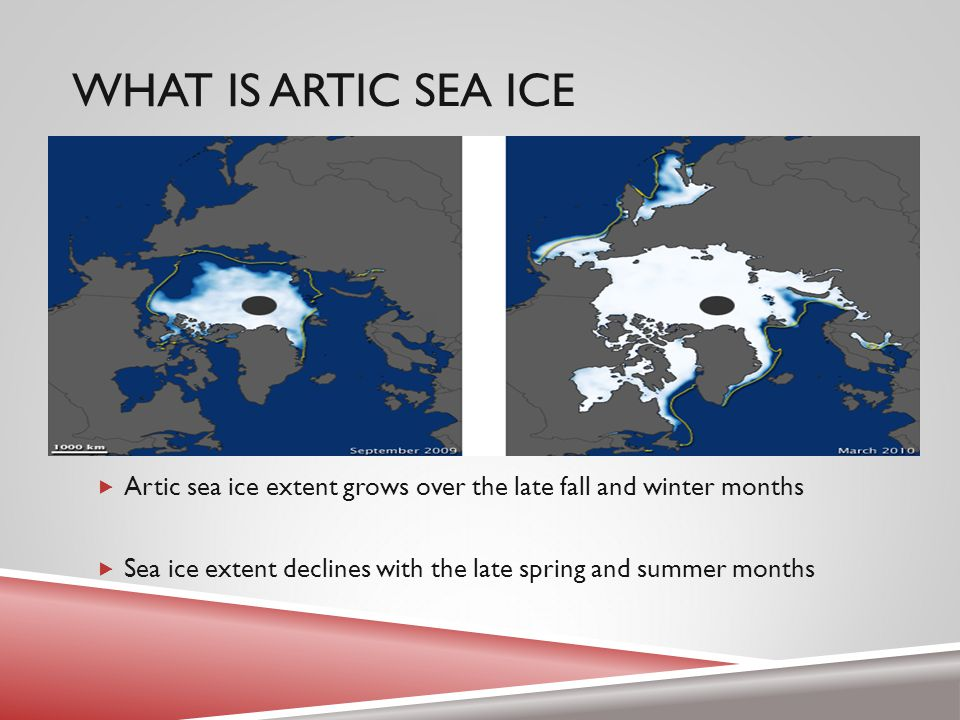THICK VS THIN SEA ICE  Thin first-year ice is accounting for more and more of spring sea ice extent  Has grown from 38% in the early 1980s to 72% in spring 2008, following the dramatic September sea ice minimum of 2007 (Stroeve et al)  Decreasing age of sea ice points toward less resistance to seasonal factors  Also works to confirm the overall loss of sea ice in the past 50 years