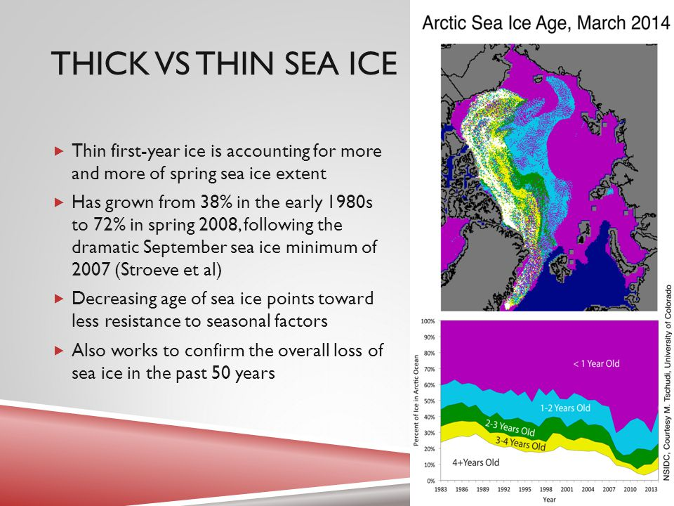 THICK VS THIN SEA ICE  Thin first-year ice is accounting for more and more of spring sea ice extent  Has grown from 38% in the early 1980s to 72% in spring 2008, following the dramatic September sea ice minimum of 2007 (Stroeve et al)  Decreasing age of sea ice points toward less resistance to seasonal factors  Also works to confirm the overall loss of sea ice in the past 50 years