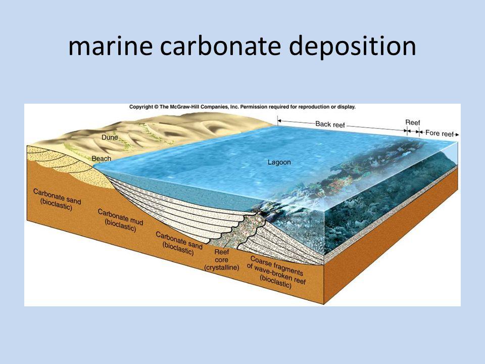 marine carbonate deposition