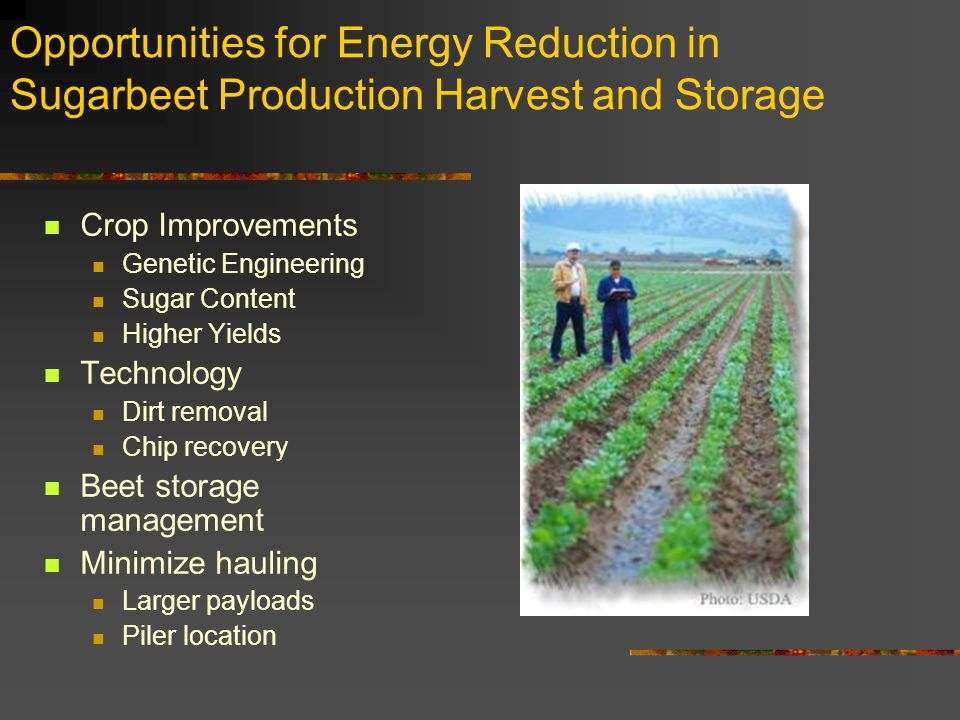 Opportunities for Energy Reduction in Sugarbeet Production Harvest and Storage Crop Improvements Genetic Engineering Sugar Content Higher Yields Technology Dirt removal Chip recovery Beet storage management Minimize hauling Larger payloads Piler location
