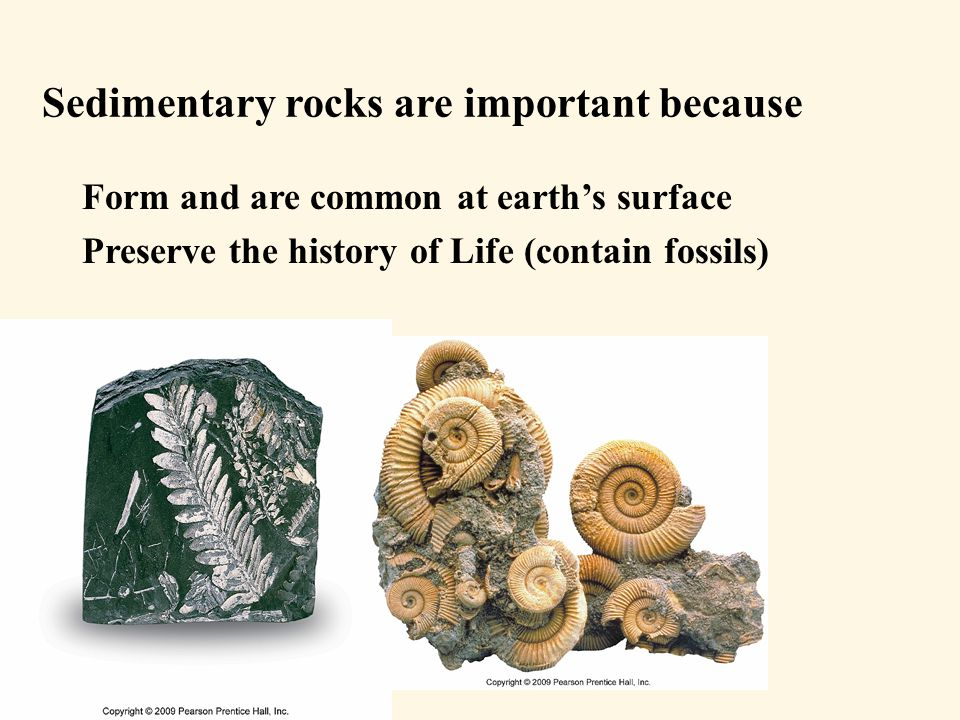 Sedimentary rocks are important because Form and are common at earth's surface Preserve the history of Life (contain fossils) Show past environments, climates Provide a geologic record of past history Major sources of energy – oil, gas, coal