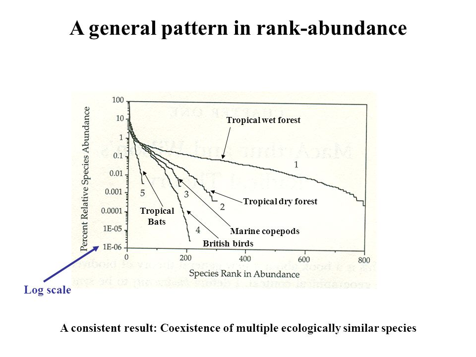 A general pattern in rank-abundance Tropical wet forest Tropical dry forest Marine copepods British birds Tropical Bats A consistent result: Coexistence of multiple ecologically similar species Log scale
