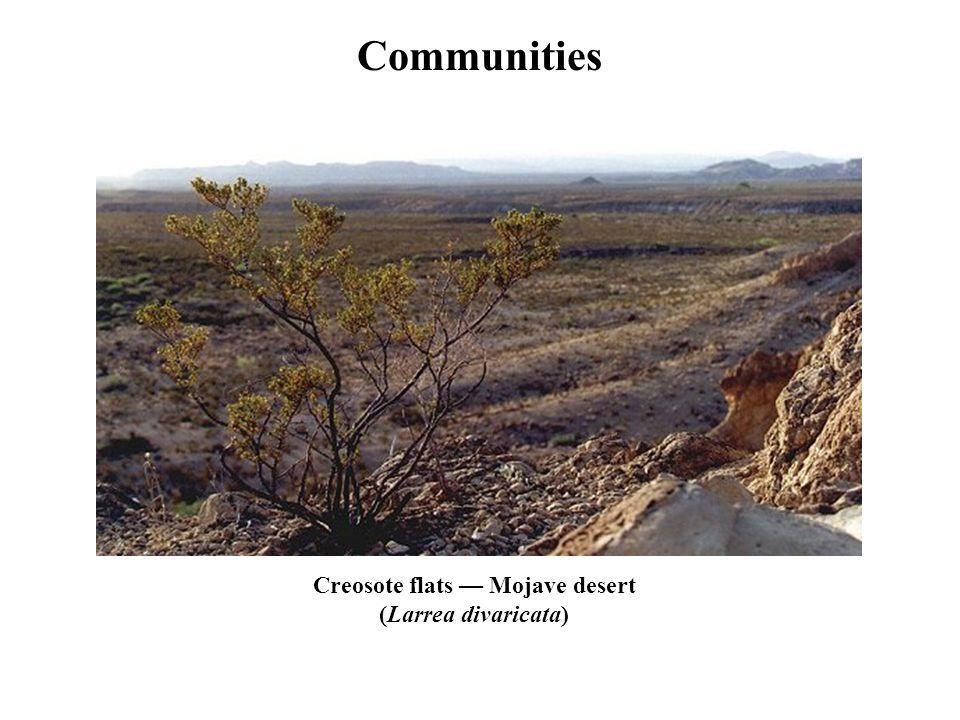 Communities Creosote flats — Mojave desert (Larrea divaricata)