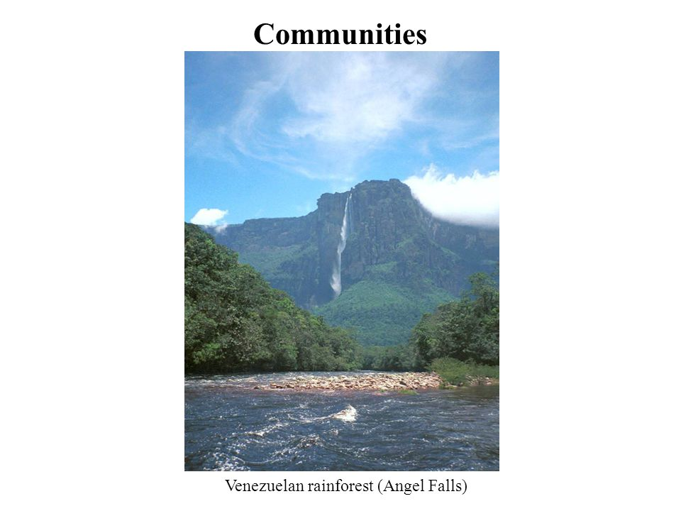 Communities Venezuelan rainforest (Angel Falls)