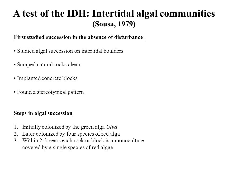 A test of the IDH: Intertidal algal communities (Sousa, 1979) First studied succession in the absence of disturbance Studied algal succession on intertidal boulders Scraped natural rocks clean Implanted concrete blocks Found a stereotypical pattern Steps in algal succession 1.Initially colonized by the green alga Ulva 2.Later colonized by four species of red alga 3.Within 2-3 years each rock or block is a monoculture covered by a single species of red algae