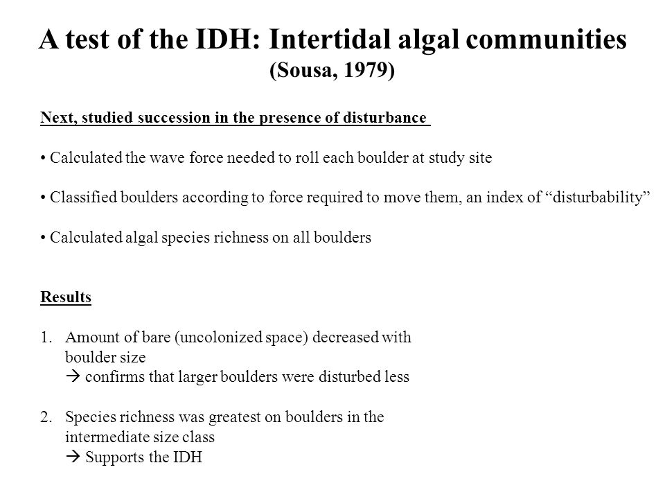 A test of the IDH: Intertidal algal communities (Sousa, 1979) Next, studied succession in the presence of disturbance Calculated the wave force needed to roll each boulder at study site Classified boulders according to force required to move them, an index of disturbability Calculated algal species richness on all boulders Results 1.Amount of bare (uncolonized space) decreased with boulder size  confirms that larger boulders were disturbed less 2.