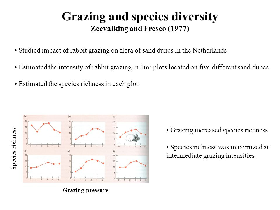 Grazing and species diversity Zeevalking and Fresco (1977) Studied impact of rabbit grazing on flora of sand dunes in the Netherlands Estimated the intensity of rabbit grazing in 1m 2 plots located on five different sand dunes Estimated the species richness in each plot Grazing pressure Species richness Grazing increased species richness Species richness was maximized at intermediate grazing intensities