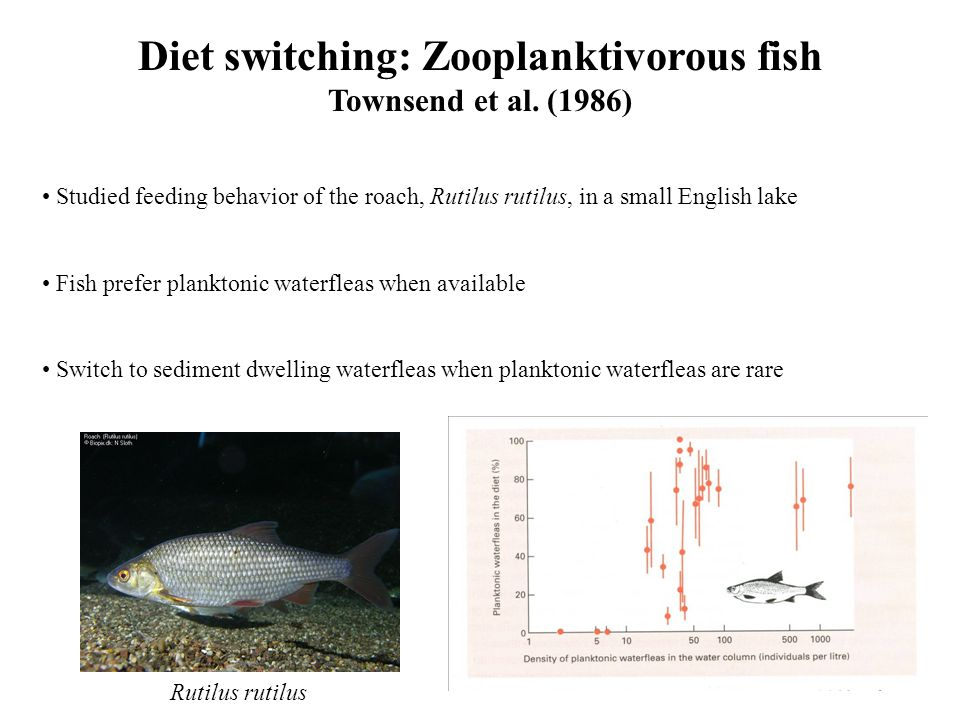 Diet switching: Zooplanktivorous fish Townsend et al.