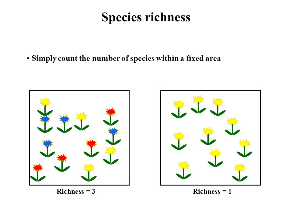 Species richness Simply count the number of species within a fixed area Richness = 3Richness = 1
