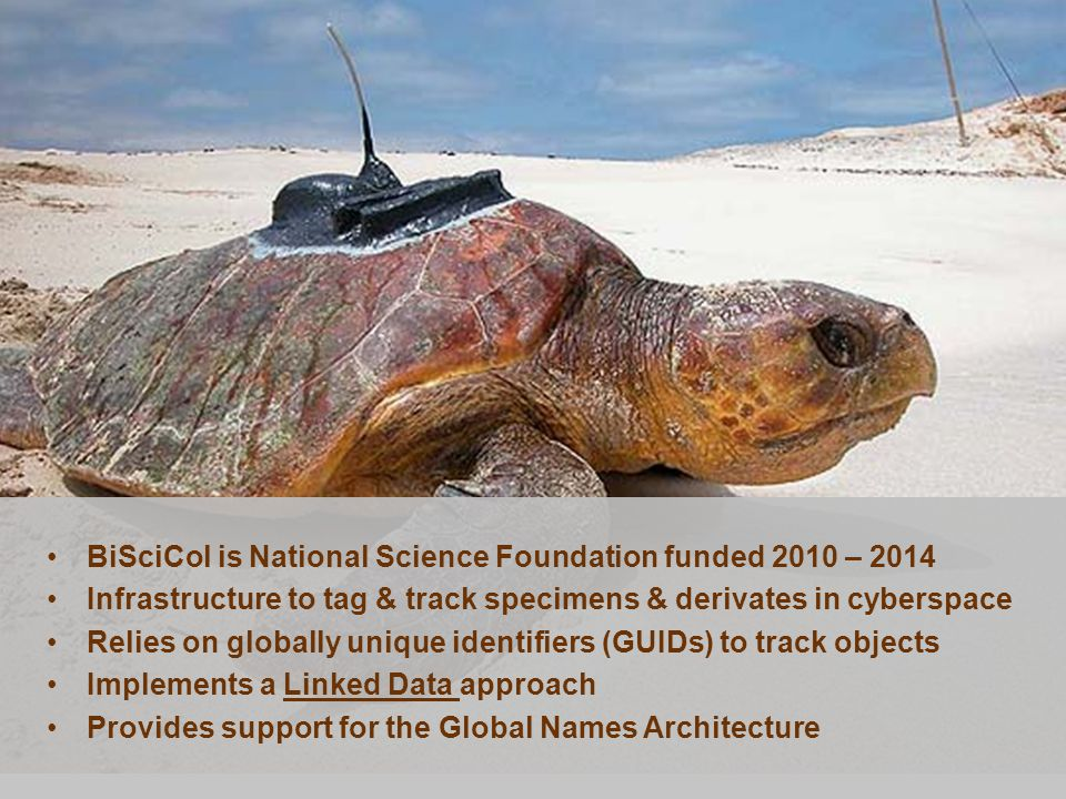 BiSciCol is National Science Foundation funded 2010 – 2014 Infrastructure to tag & track specimens & derivates in cyberspace Relies on globally unique