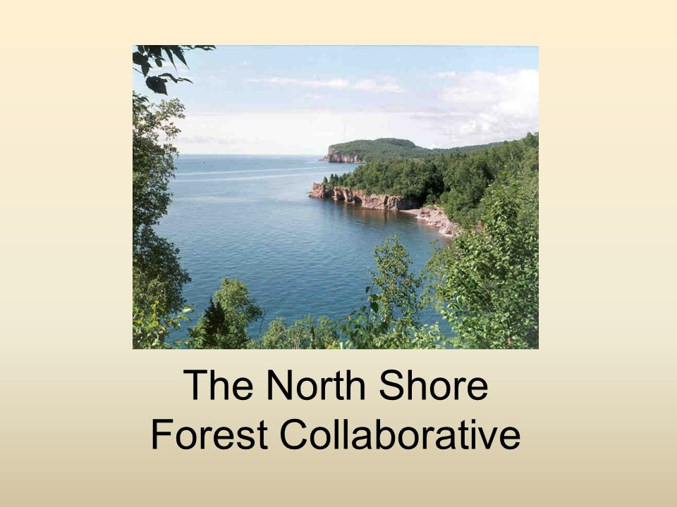 NSFC - Mission To revitalize and maintain a healthy and functioning ecosystem along the North Shore of Lake Superior with emphasis on restoring and maintaining native trees and associated forest communities.