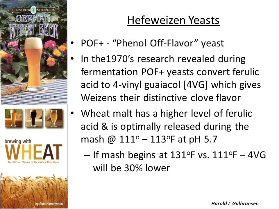 """Hefeweizen Yeasts POF+ - """"Phenol Off-Flavor"""" yeast In the1970's research revealed during fermentation POF+ yeasts convert ferulic acid to 4-vinyl guai"""