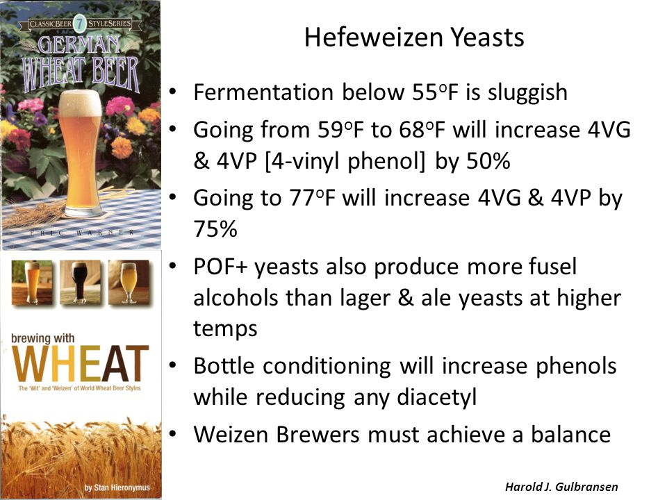 Hefeweizen Yeasts Fermentation below 55 o F is sluggish Going from 59 o F to 68 o F will increase 4VG & 4VP [4-vinyl phenol] by 50% Going to 77 o F will increase 4VG & 4VP by 75% POF+ yeasts also produce more fusel alcohols than lager & ale yeasts at higher temps Bottle conditioning will increase phenols while reducing any diacetyl Weizen Brewers must achieve a balance Harold J.