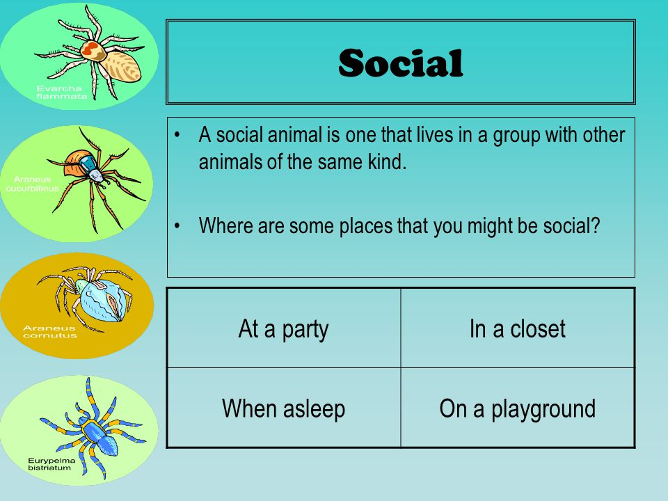 Social A social animal is one that lives in a group with other animals of the same kind. Where are some places that you might be social? At a partyIn