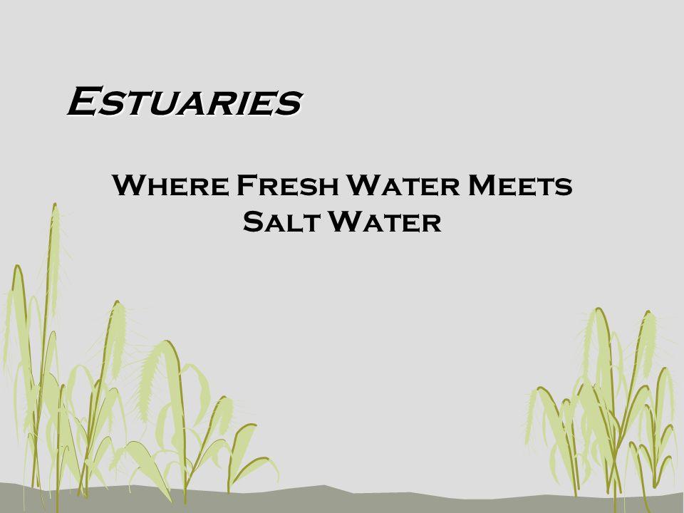 Estuaries Where Fresh Water Meets Salt Water