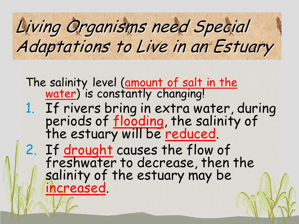 Living Organisms need Special Adaptations to Live in an Estuary The salinity level (amount of salt in the water) is constantly changing! 1.If rivers b
