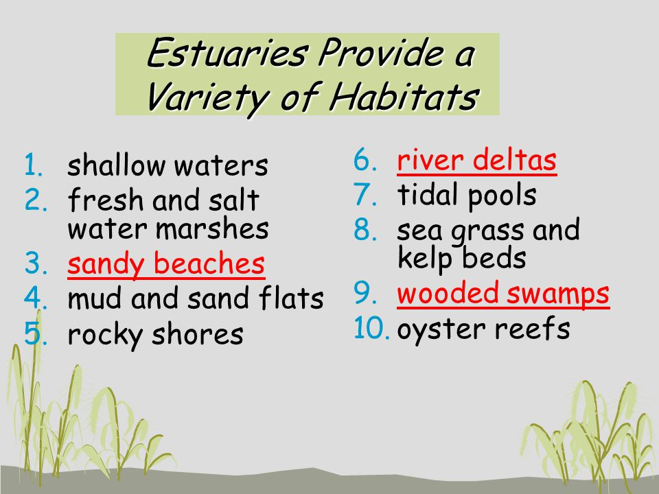 Estuaries Provide a Variety of Habitats 1.shallow waters 2.fresh and salt water marshes 3.sandy beaches 4.mud and sand flats 5.rocky shores 6.river de