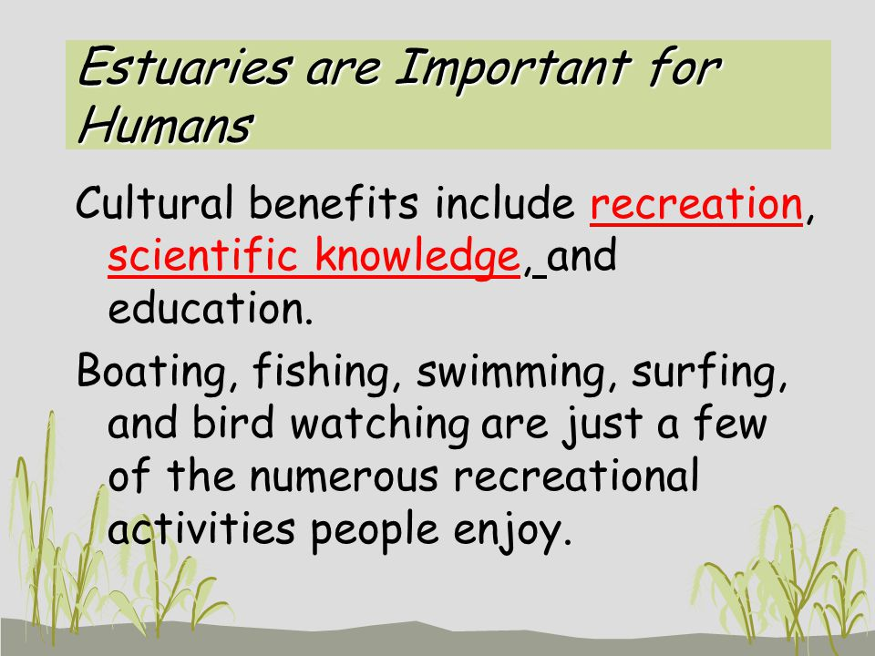 Estuaries are Important for Humans Cultural benefits include recreation, scientific knowledge, and education. Boating, fishing, swimming, surfing, and